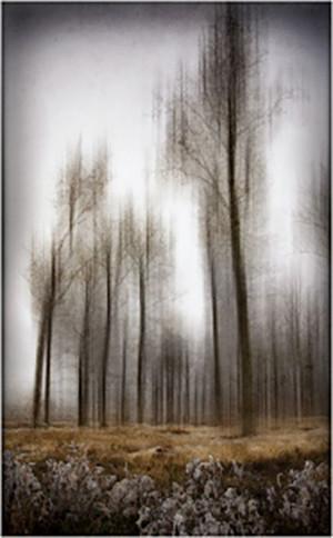 """Challenge """"La Forêt"""""""