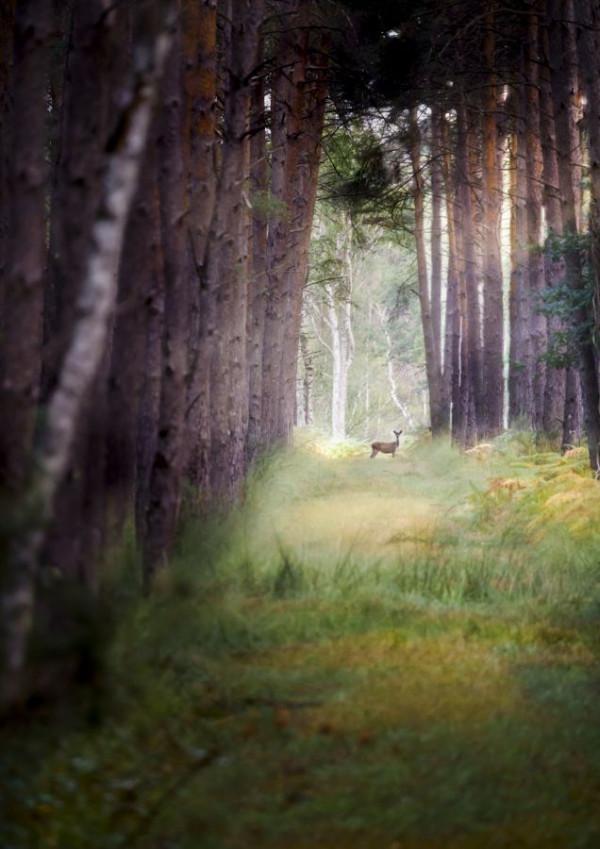 Challenge Régional - La Forêt - Robert T