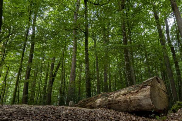 L'arbre à Terre - Challenge Régional - La Forêt - Dominique T